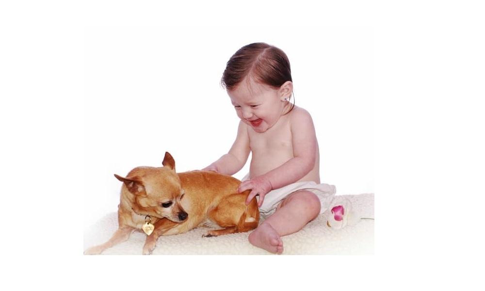 Boy Chihuahua Dog Names
