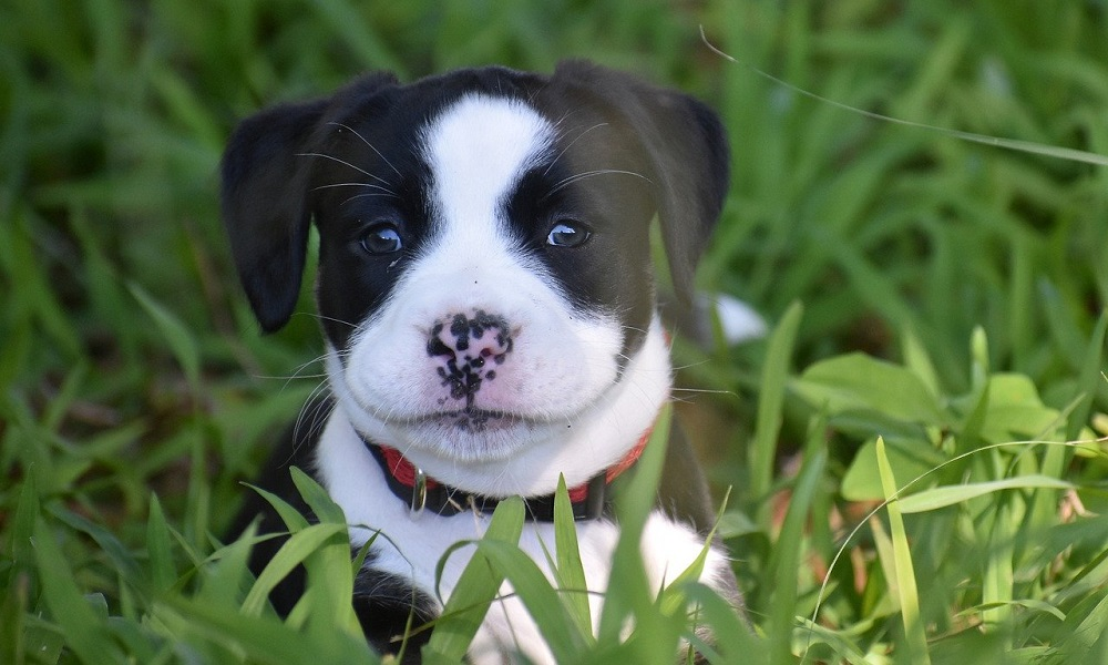 Cute Native American Dog Names