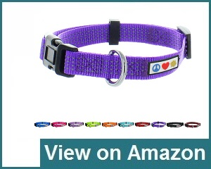 Pawtitas Dog Collar Review