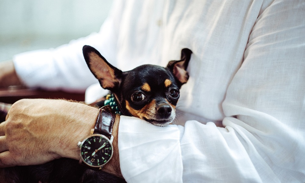 Small Chihuahua Names