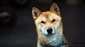 Korean Dog Names