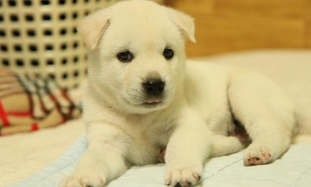 Korean Dog Names for Female