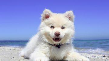 Preppy Dog Names