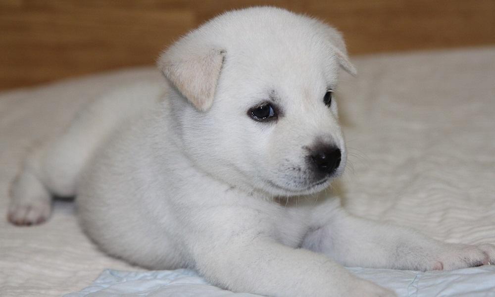 Super Cute Korean Puppy Names