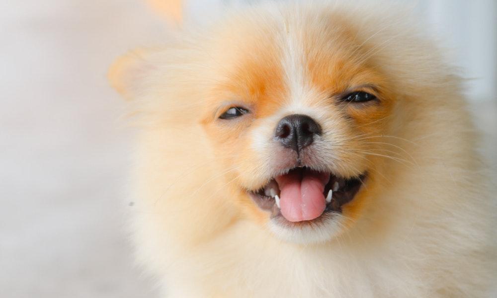 Super Cute Disney Dog Names