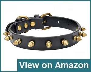 Aolove Classic Adjustable Collar Review