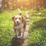 Best Dog Shock Collars