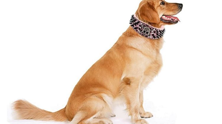 Best Spiked Dog Collars