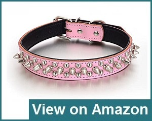 Rachel Dog Collars Review