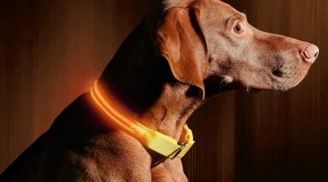 Best LED Dog Collars