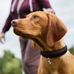 Best Paracord Dog Collars