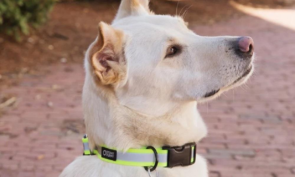 Best Reflective Dog Collars