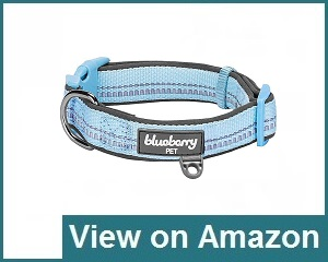 Blueberry Pet Review
