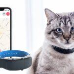 Best GPS Cat Trackers & Collars