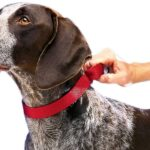 Best Martingale Dog Collars