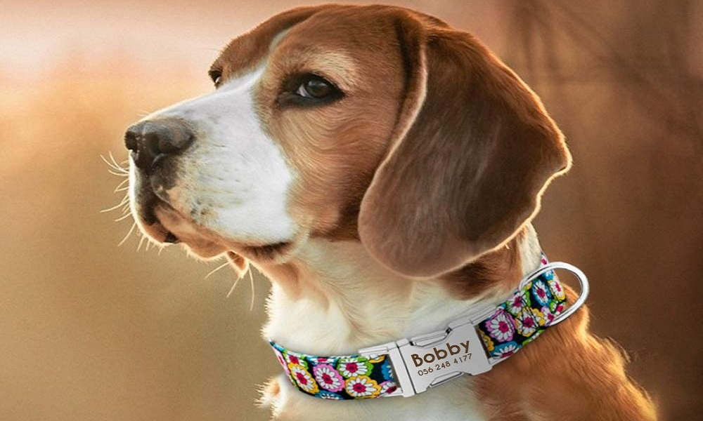 Best Personalized Dog Collars