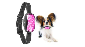 Best Vibrating Dog Collar