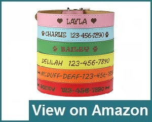 Custom Catch Personalized Collar Review