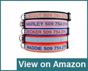 GoTags Personalized Collar Review