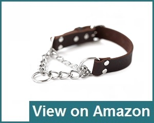 Mighty Paw Collar Review