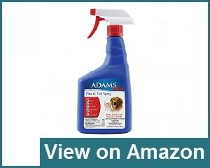Adams Plus Review