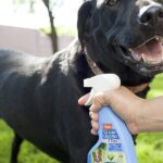 Best Flea Spray for Dogs