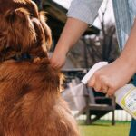 Best Tick Spray for Dogs
