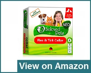 Beloved Pets Review