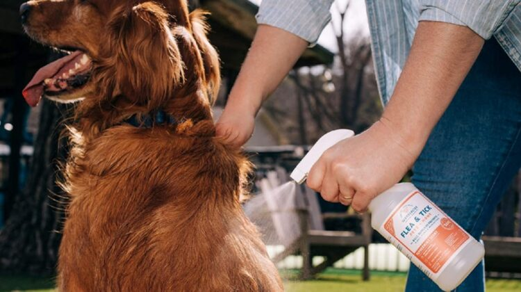 Best Dog Repellent Sprays