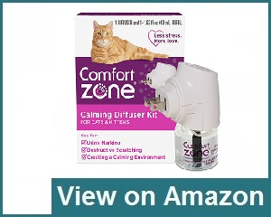 Comfort Zone Review