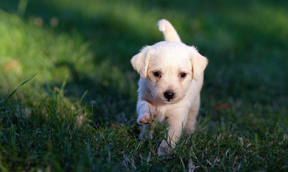 Cute Unique Dog Names