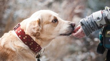 Labrador Dog Names