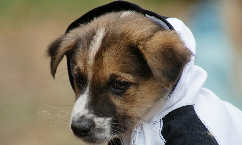 Male Swedish Dog Names