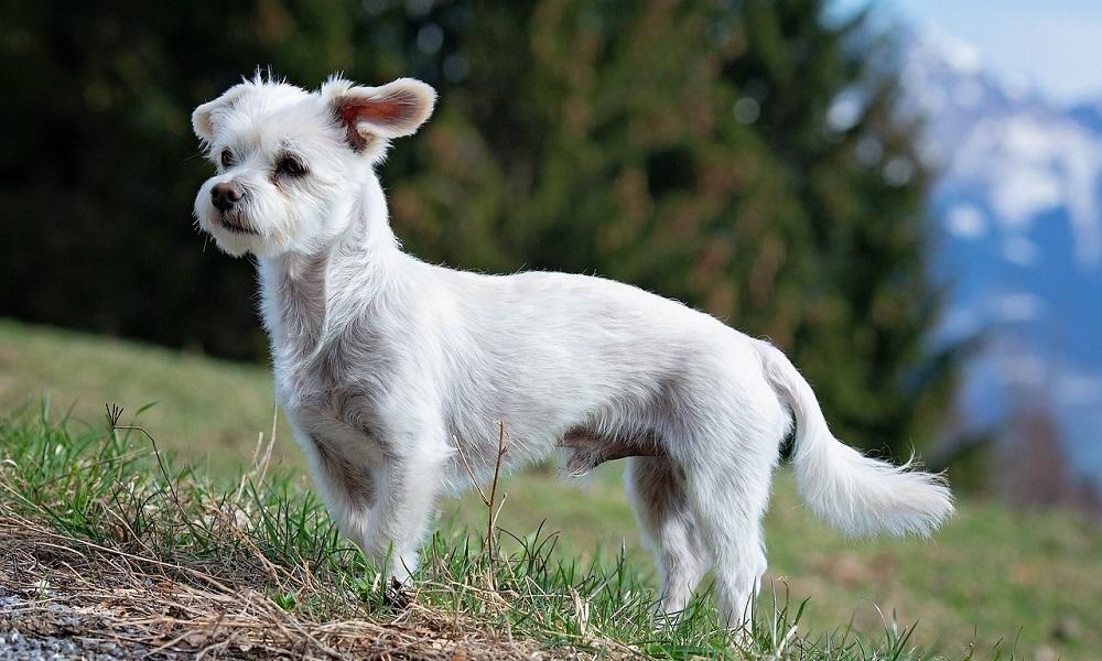 Male White Dog Names