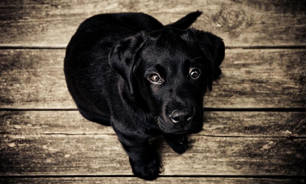 Unique Black Dog Names