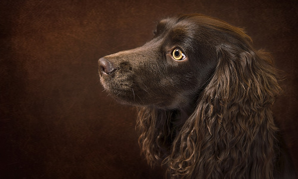 Unique Dog Names for Brown Dogs