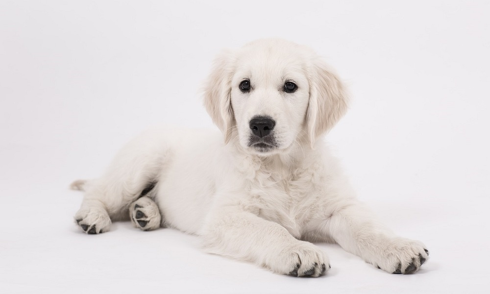 Unique Names for Male Dogs