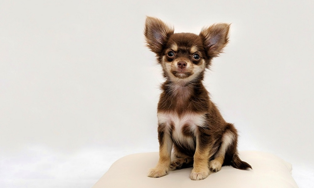 Unique Names for Small Dogs