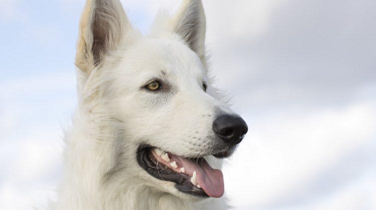 Best White Dog Names