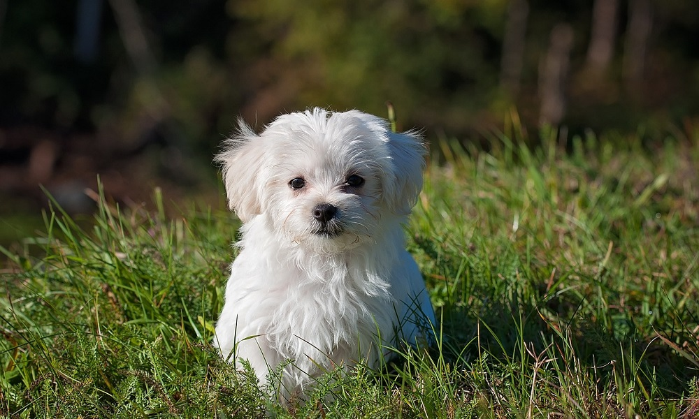 White Dog Names Through Weather and Nature