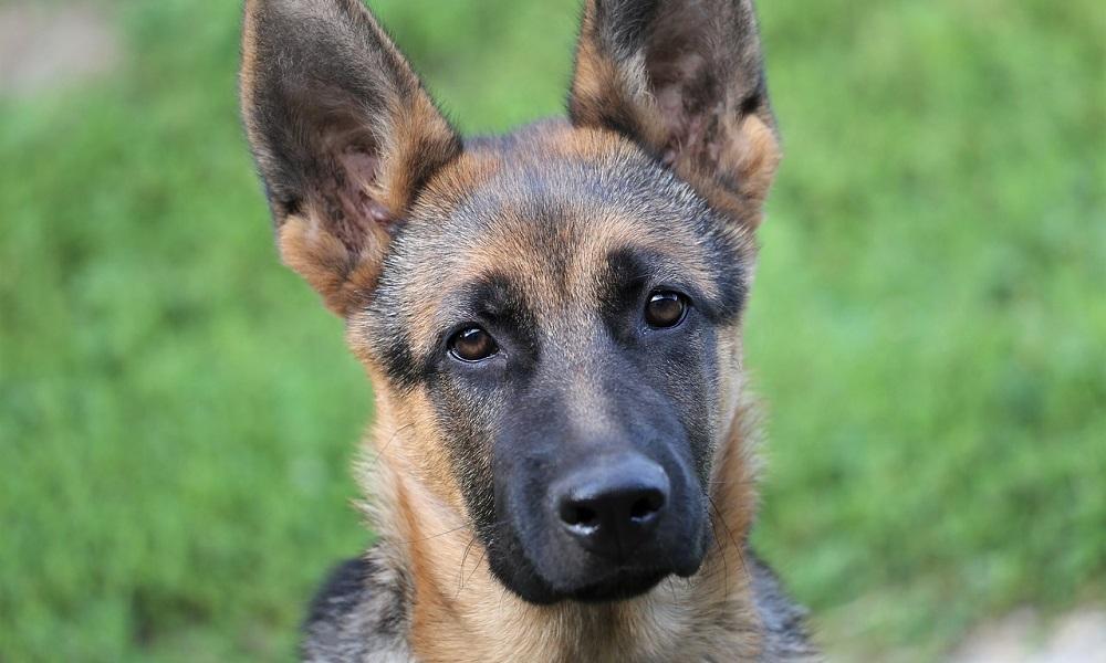 Females German Shepherd Names