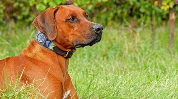 Measure Dog Collars