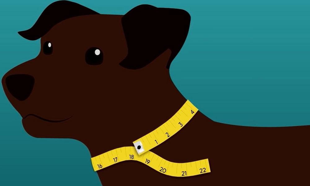 Measuring Your Pets Neck Size