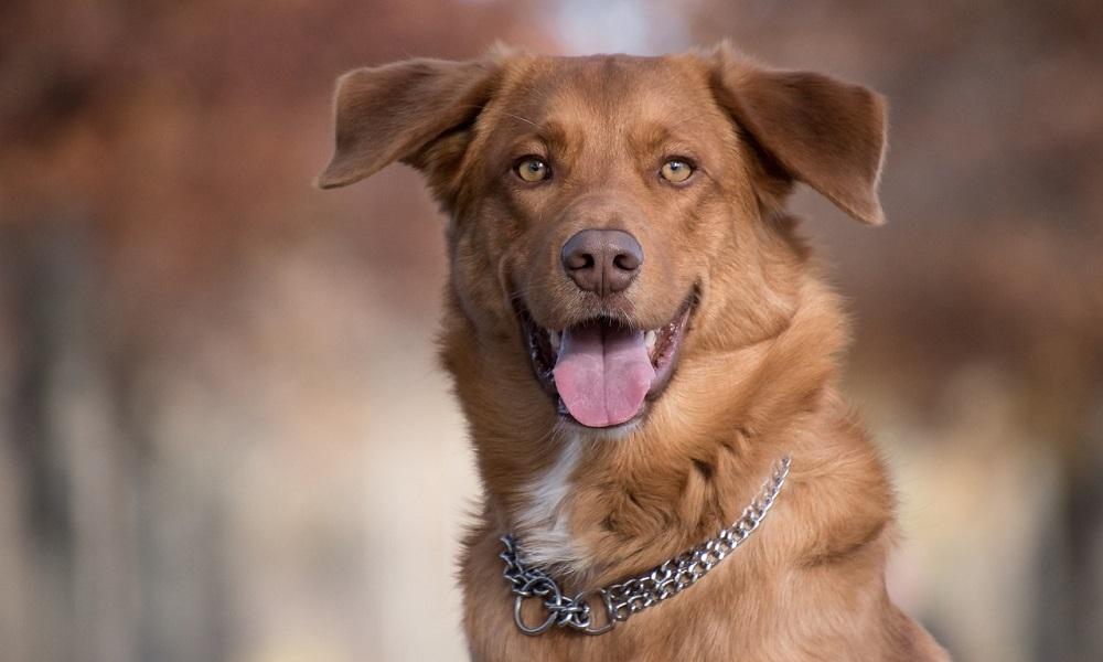 How to Put a Choke Collar on a Dog