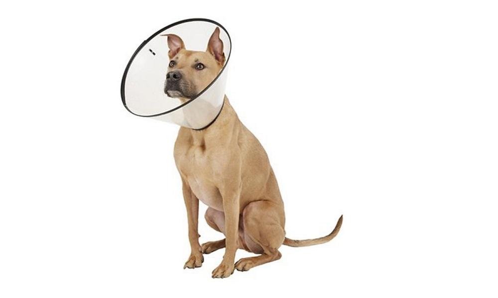 Put E-collar On a Dog