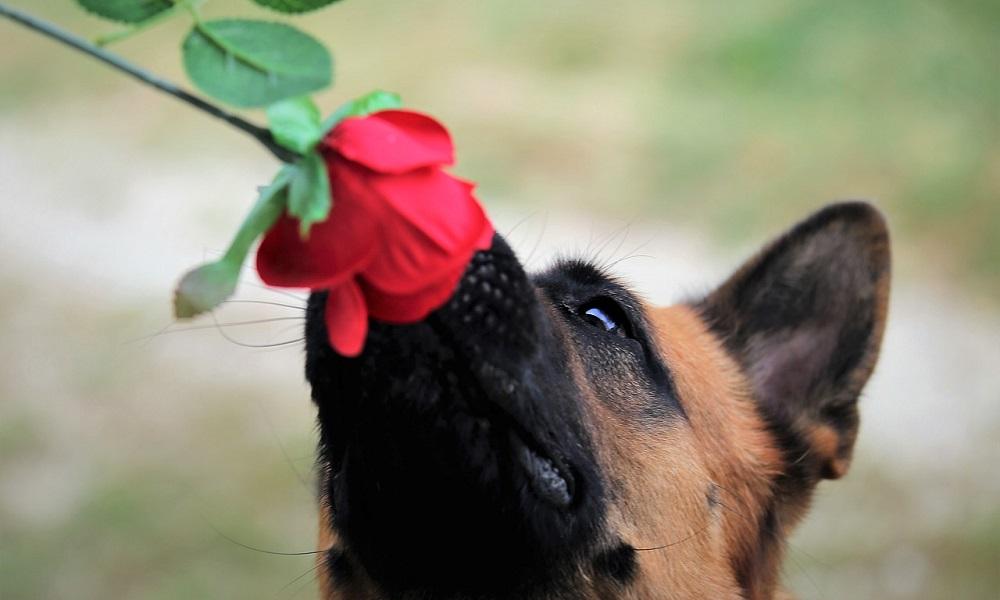 Super-Cute German Shepherd Dog Names