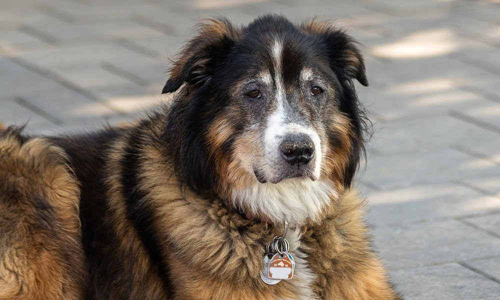 Attach Tags onto Dogs Collar