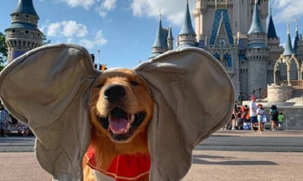 Big Dog Names Inspired by Disney Movies