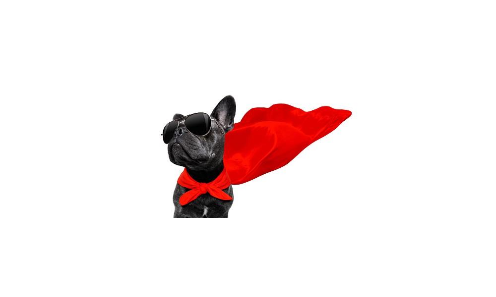 Big Dog Names Inspired by Superheroes