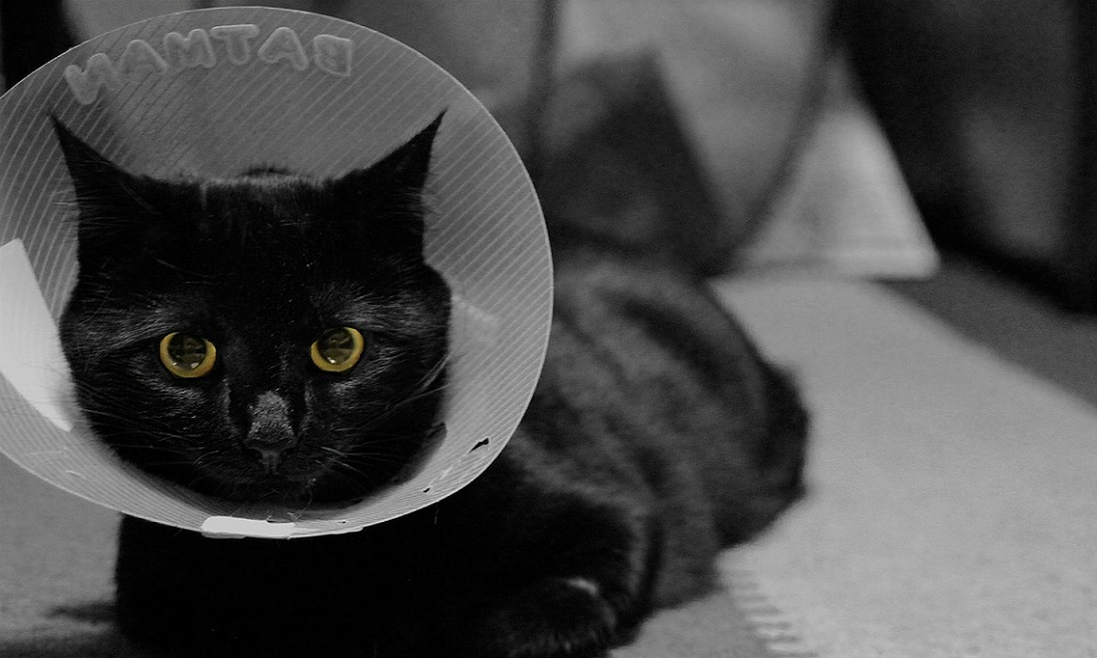 How to Make Cat Cone Collar